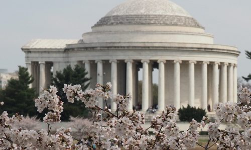DC with cherry blossoms