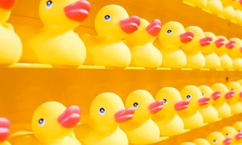 rubber ducks lined up